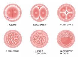 试管婴儿移植,3天胚胎还是5天囊胚比较好呢?